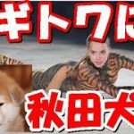 【海外の反応】平昌オリンピック金メダル「ザギトワ」の夢を叶えた日本にロシアから感謝の声が殺到!「日本との関係はもっと良くなる!」とロシア人が感動!