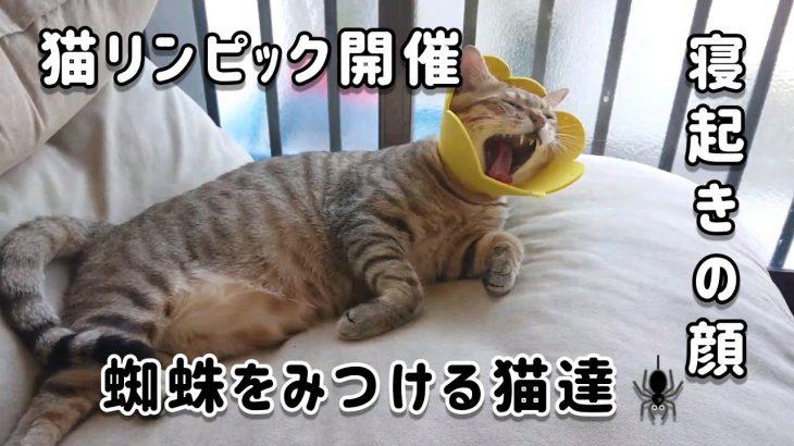 【猫猫オリンピック開催】寝起きの可愛い猫達【蜘蛛を追う猫】